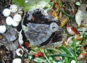 compost-pile