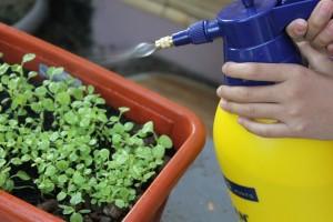 organic-garden-spray