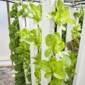 hydroponic vegetable gardening basics