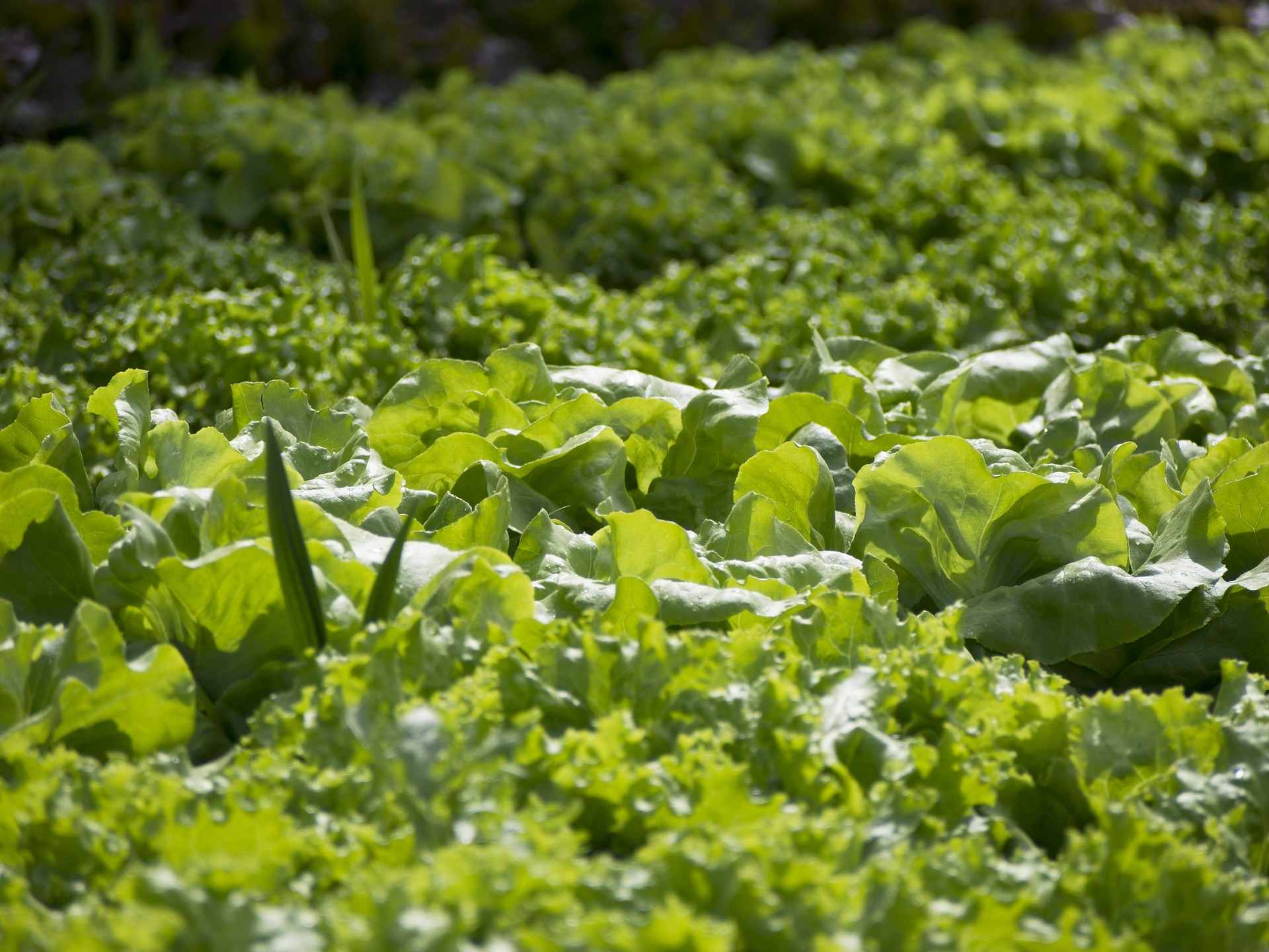 organic gardening kits