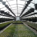 greenhouse for organic garden
