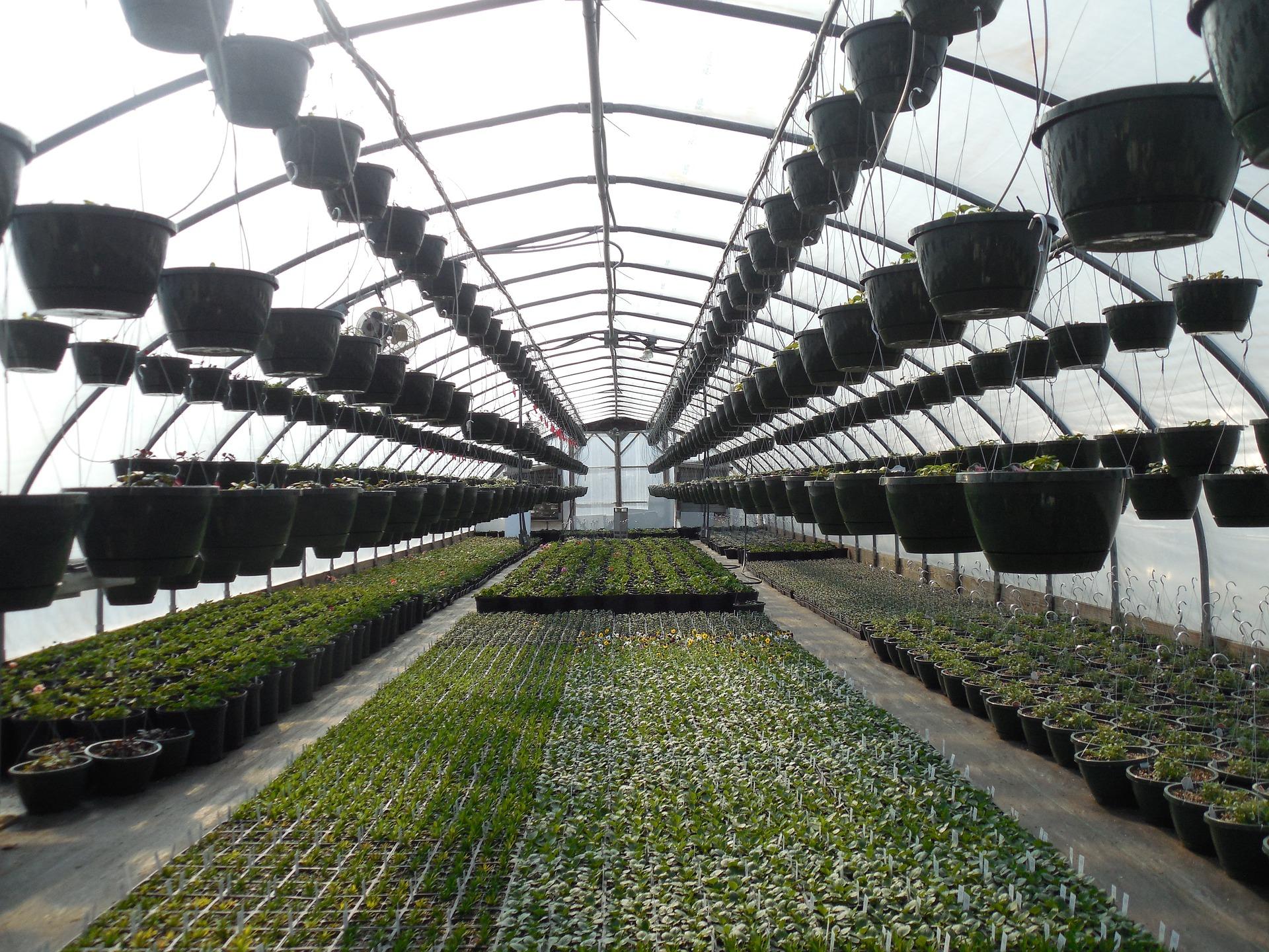 greenhouse for organic garden