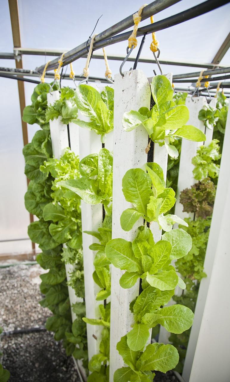 hydroponic vegetable gardening basics